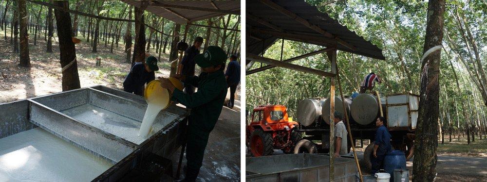 Производство натурального латекса в Таиланде